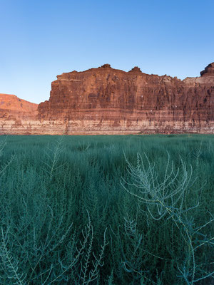 Glen Canyon/Lake Powell. Utah, USA 8/2014
