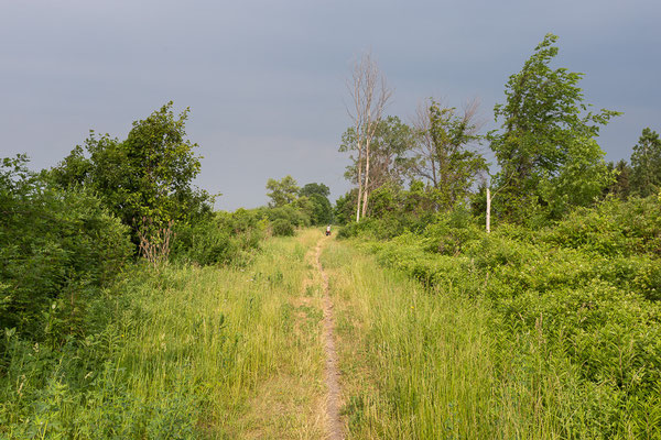 Between Camlachie and Sombra. Ontario, Canada 6/2014