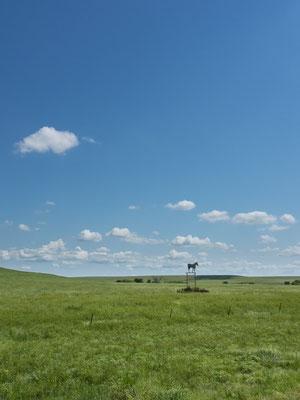 Die Schönheit der Prärie... Kansas, USA 6/2014