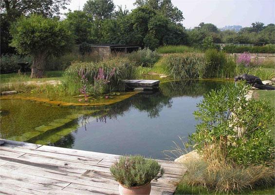 Piscina natural Bionova_Reino Unido