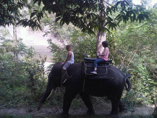 elephant trekking in Tankahan