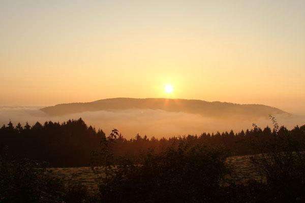 Tagesanbruch am Kermeter/Eifel 2014