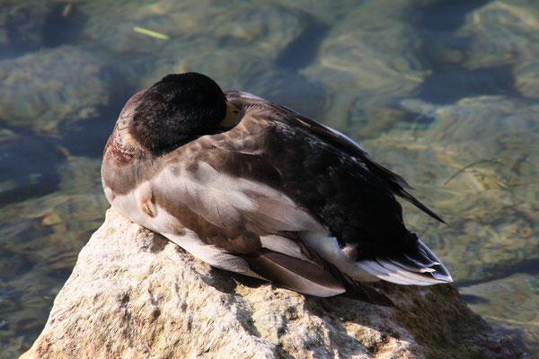 Bardolino - Lago di Garda 2011