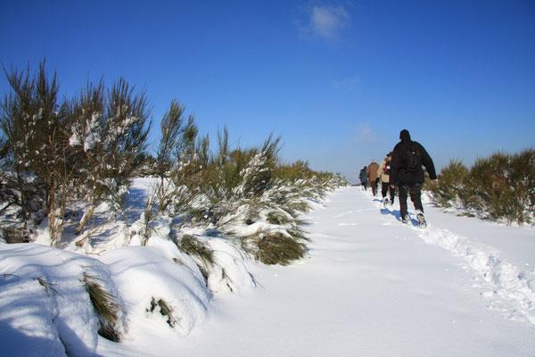 Dreiborner Hochfläche - Eifel 2009