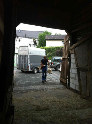... und Thorsten übernimmt den Transport zum neuen Stall