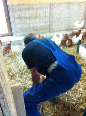 Thorsten setzt die Neuankömmlinge behutsam in den Stall