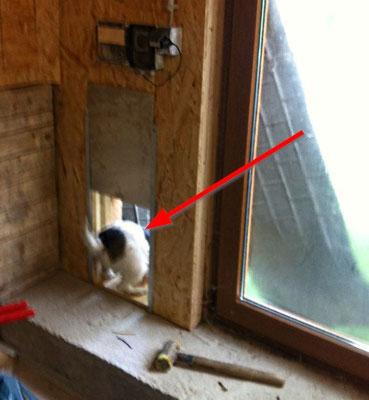 Hofhund Betty testet den Hühnerausgang und geht stiften
