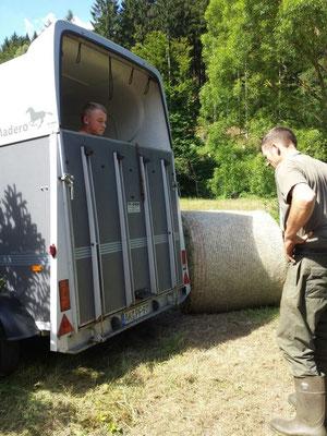 Thorsten und Jonathan bringen die beiden Rinder
