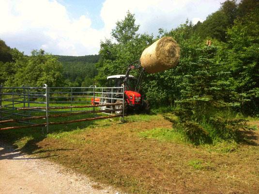 Das Rindergehege ist fertig. Dekoriert mit dem Hoftraktor