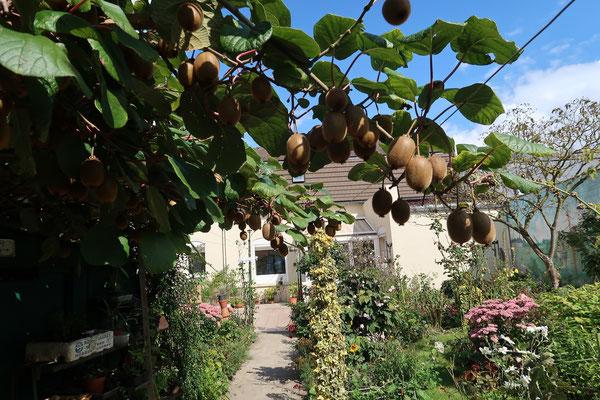 Au bout de la fête, autre attraction : Le jardin de Gérard.On passe sous un porche de kiwis pour entrer dans le jardin de Gérard