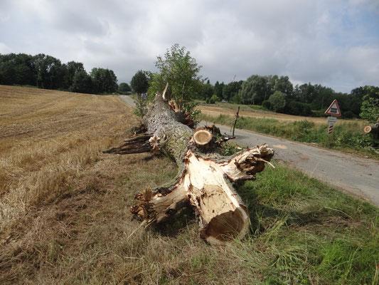 l'arbre débité
