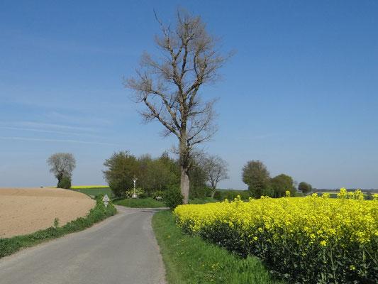 Voici cet arbre tel qu'il était au printemps