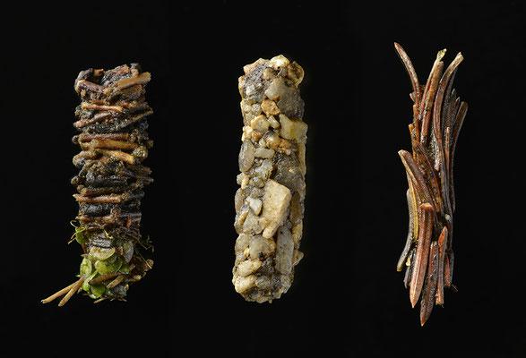 Köcherfliegenlarven