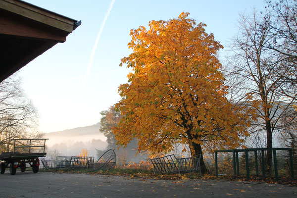 Herbst am Hof