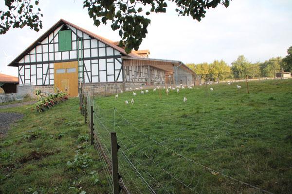 Bruderhähnchen unterwegs im Wintergarten und Grünauslauf
