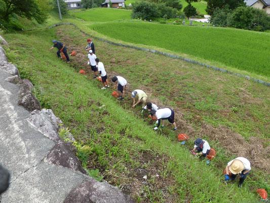 阿智高校の生徒さんと曼珠沙華の球根を植えました