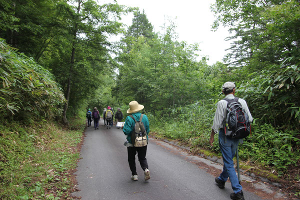 富士見台に向かって林道を歩く