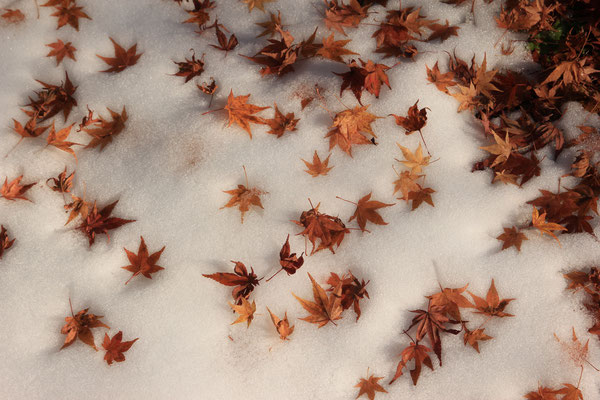紅葉と雪の共演