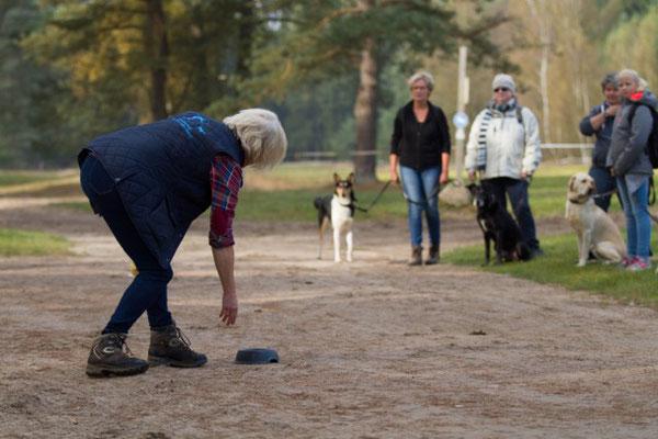 Hundewanderung mit Lerneffekt