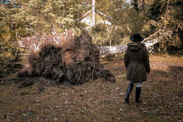 Der wütende Sturm hat diesen stabilen Baum weg gerissen. Die Wurzeln waren so fest im Boden verankert, dass sie genauso groß waren wie meine Frau.