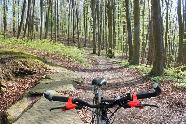 Trail zur Blutbachquelle, Süntel