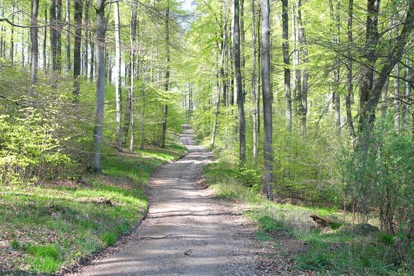 Waldweg, Süntel