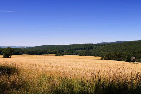 Wald-und Wiesenpanorama oberhalb Nettelrede