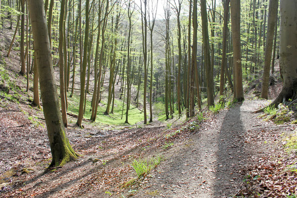 Trail Blutbachtal, Süntel