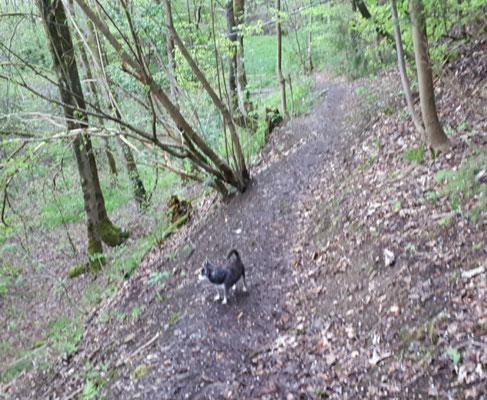 Prinz Barny allein im Wald