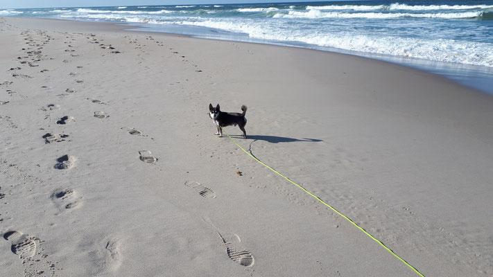 Prinz Barny hat den Strand friedlich erobert