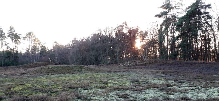 die Klein Bünstorfer Heide umzäunt von Kiefernwäldern