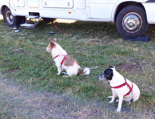 Cindy und Bobby warten auf ihre Menschen