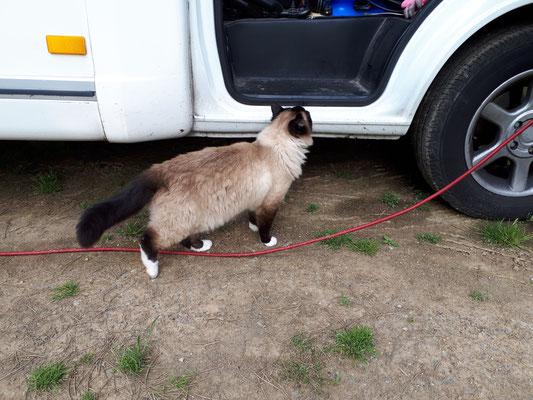 Die Katze kam dann noch auf einen kurzen Besuch. Barny war entspannt. Er kennt seine Größe