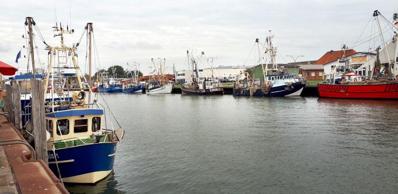 Krabbenkutter im Fischereihafen