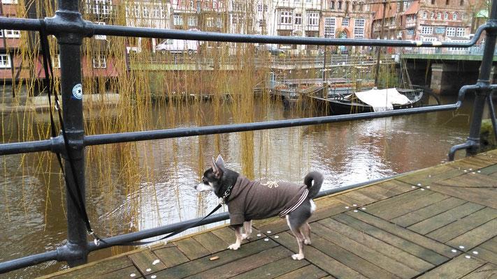 Barny checkt die Lage auf der Ilmenau