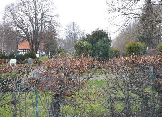 Der Friedhof in Lauenau, sehr ruhige Nachbarn ;-))