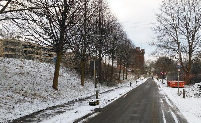 am Sonntanmorgen, wer will Schnee? Barny jedenfalls nicht