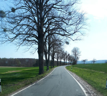 die Straße bei Ottenstein
