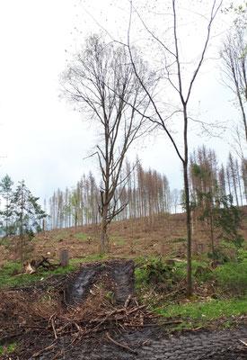 hier war einmal ein Wald