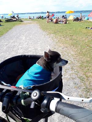 Viel zu heiß, Barny hat sich eine Kühldecke umgehängt :- ))