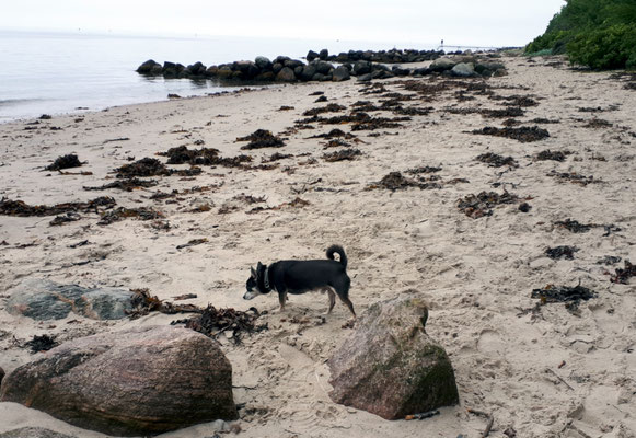 Der Strandabschnitt gehört jetzt SKH Prinz Barny