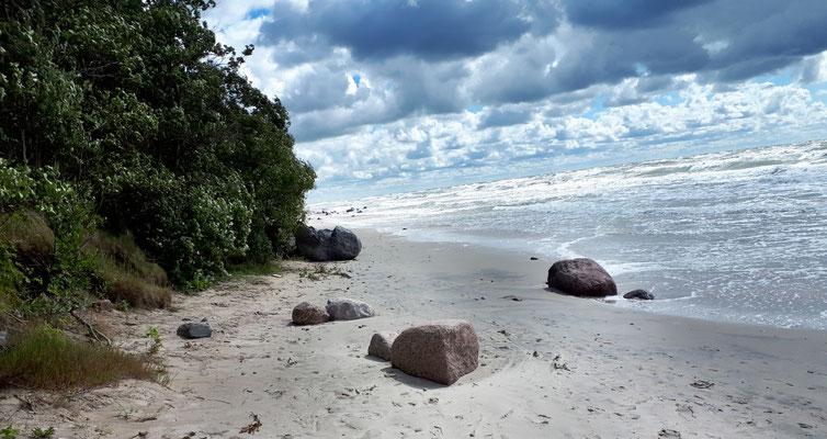 Heute ist für Chihuahuas kein Strandwetter