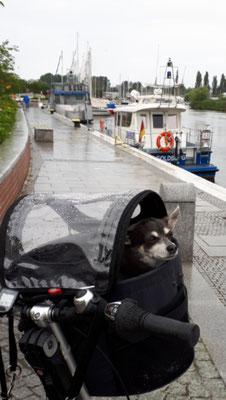 Auf der Promenade am Stadthafen bei leichtem Regen