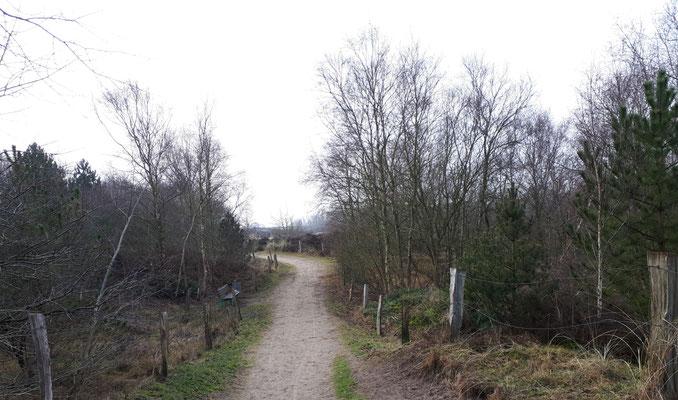 Dünenweg bei St. Peter-Dorf