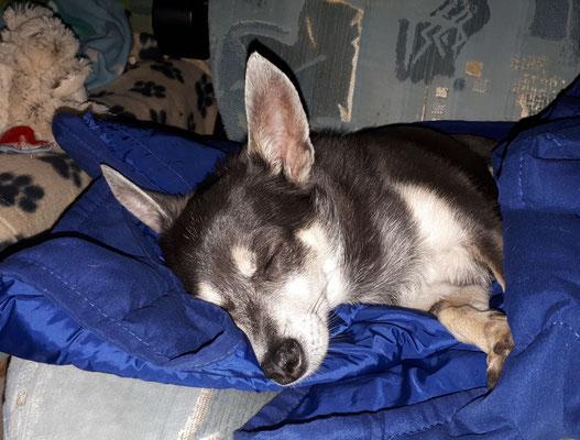 Barny schläft bereits
