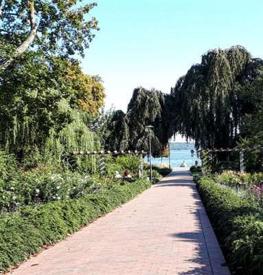 Rosenweg zum Eutiner See