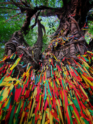Sacred Trees can be found in many places