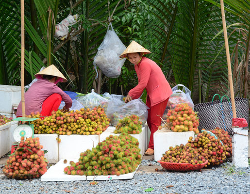 Fruit Orchards in the Mekong Delta