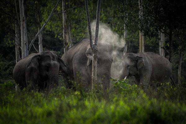 Elephants at Kuiburi Nationalpark