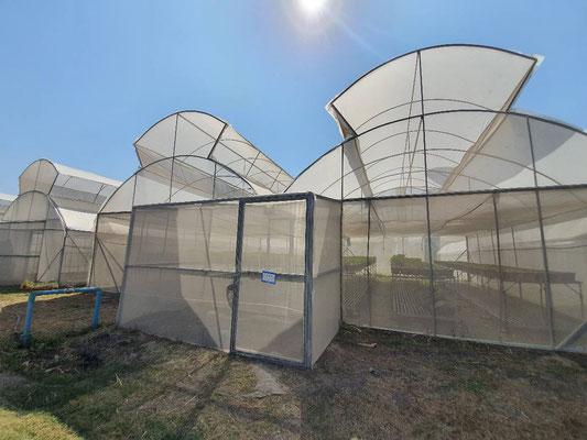 Greenhouse at Jaifah Farm
